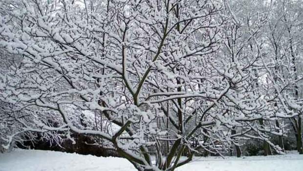 neige arbre noel froid