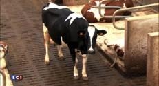"""Fin des quotas laitiers : """"Pas de conséquences pour les consommateurs"""""""