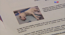 Le 13 heures du 23 mai 2015 : Alerte à la rage dans la région de Saint-Etienne après la mort d'un chien - 190