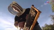 Les apiculteurs du Languedoc-Roussillon confrontés aux vols de ruches