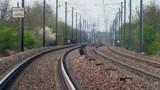 Un pigeon bouleverse le trafic ferroviaire !
