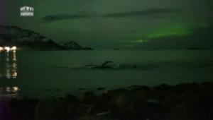 Le spectacle saisissant de baleines sautant devant des aurores boréales