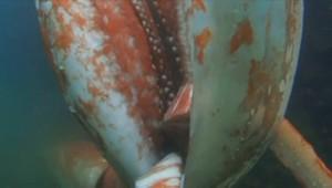 Un calamar géant s'invite à Noël, au Japon