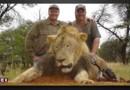 Le Zimbabwe demande l'extradition du chasseur responsable de la mort du lion Cecil