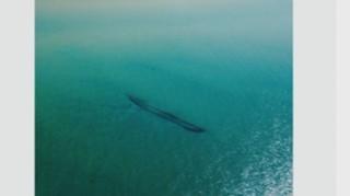 Etats-Unis : les glaces du Lac Michigan fondent, des épaves réapparaissent