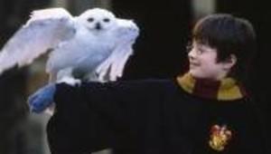 Image du film Harry Potter avec chouette