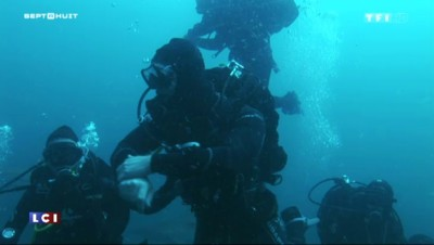 Des plongeurs appâtent un requin tigre et l'approchent sans protection