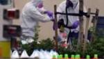 anthrax floride
