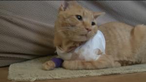 chat balle héros york
