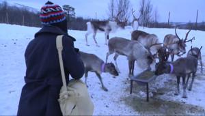 Le 20 heures du 24 décembre 2014 : A la découverte de la Norvège, pays des rennes du Père Noël - 1763.445