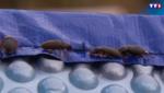 Essonne : les coléoptères contre-attaquent (28/07)