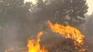 incendie banlieue nimes