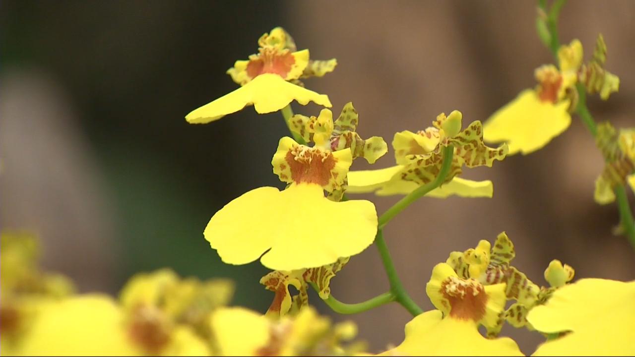 a orl ans une exposition soigne les orchid es lci. Black Bedroom Furniture Sets. Home Design Ideas