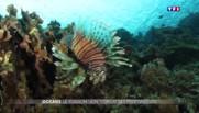 Océans, le poisson-lion, terreur des profondeurs