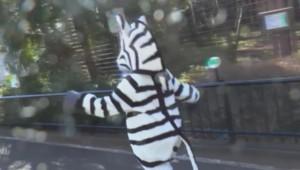 zèbre - simulation - zoo de Tokyo - Japon