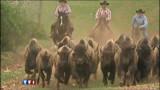 Le 20H avant l'heure : les derniers bisons d'Amérique, un trésor national