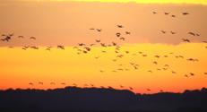 Le 13 heures du 31 octobre 2014 : Les grues cendr� ont entam�eur migration - 1563.791