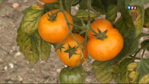 Le 20 heures du 8 septembre 2013 : Au rendez-vous des amateurs de tomate - 1851.8719999999998