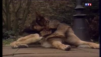 """C'était un 19 décembre : un chien viré de la police parce que """"trop gentil"""""""