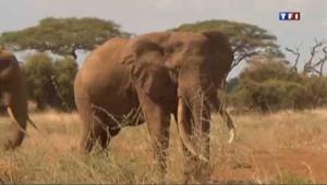 Kenya : la guerre contre le braconnage