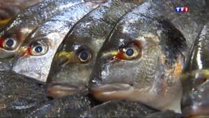 Le 13 heures du 19 juin 2015 : Dans les supermachés, le poisson a la cote - 889