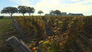 Le 13 heures du 31 octobre 2014 : Tendance : dormir au milieu des vignes pour mieux en appr�er les c�ges%u2026 - 2137.721