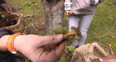 Le 20 heures du 21 octobre 2014 : Auvergne : les champignons pullulent toujours dans les for� - 1443.754