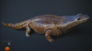 Une nouvelle espèce de salamandre géante découverte au Portugal