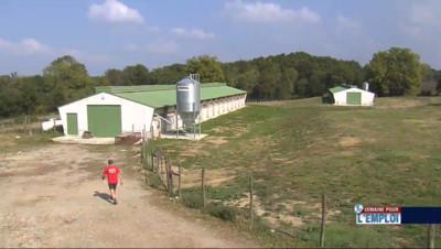 Le 13 heures du 2 octobre 2014 : Semaine pour l'emploi: les agriculteurs recrutent de salari�- 1169.083