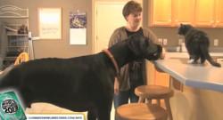 Zeus, le chien le plus grand chien du monde, est mort