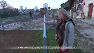Marie, une agricultrice installée... dans les quartiers nord de Marseille