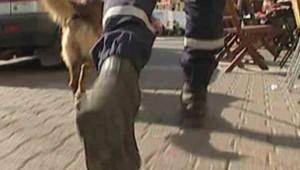 gendarme avec un chien à la recherche d'indices, Image prétexte