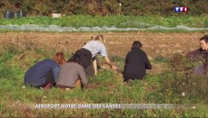Notre-Dame-des-Landes : les militants déterminés à résister