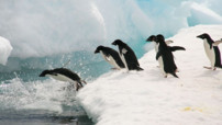 TF1-LCI Manchots Antarctique