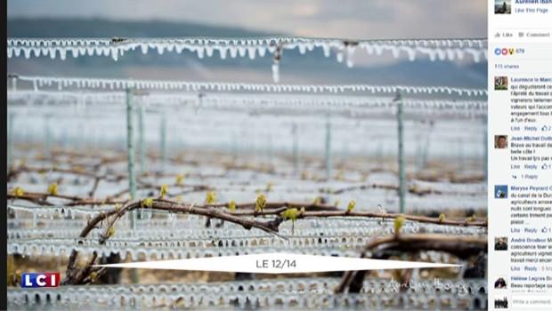 Des bougies dans les vignes pour lutter contre les gelées matinales
