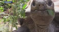 tortue géante au zoo du Bronx