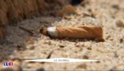 La plage de Cap Coz, à Fouesnant, la seule plage non-fumeur de la France cet été