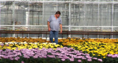 Le 13 heures du 20 octobre 2014 : Les chrysanth�s occupent les p�ni�stes �lein temps - 1953.36