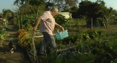 Le 13 heures du 2 octobre 2014 : L'arriv�de l%u2019automne dans un jardin - 1885.1615241088869
