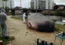 La baleine.