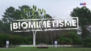 Biomimétisme : quand la technologie imite la nature