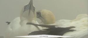 oiseaux GRAND LARGE