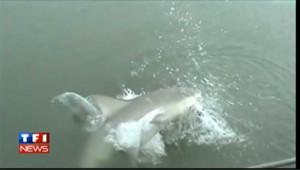 Vidéo : Elle pêche un poisson et se le fait dévorer par un gros requin