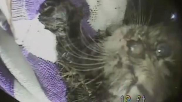 chaton sauvetage états-unis