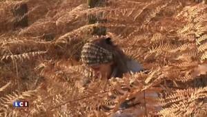 La forêt d'Orléans passée à la loupe, des capteurs pour étudier son fonctionnement