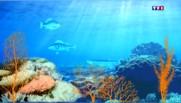Une minute pour comprendre : les océans, thermostats de notre planète