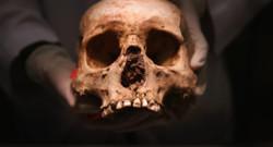 squelette prétexte crâne illustration