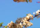 Le 20 heures du 19 avril 2015 : Avec le printemps, les allergies au pollen arrivent ! - 1370.944