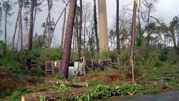 Les dégâts de la tempête Klaus sur la forêt dans la commune de Saint-Avit, près de Mont-de-Marsan (25 janvier 2009)