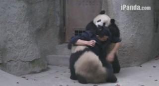 Ces pandas ne veulent vraiment pas prendre leurs médicaments
